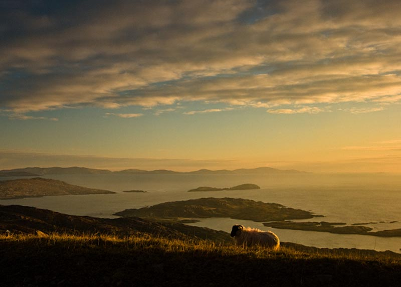 Sheep on the Ring of Kerry Photographic Print