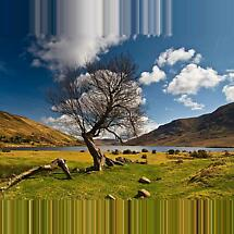 Connemara tree Photographic Print